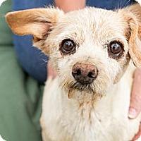 Adopt A Pet :: Precious - Acton, CA