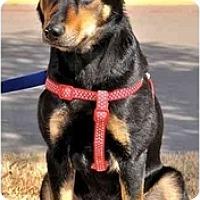 Adopt A Pet :: Freedom - Arlington, TX