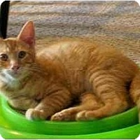 Adopt A Pet :: Chance - Jenkintown, PA