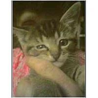 Adopt A Pet :: Tikki - Owasso, OK