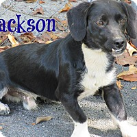 Adopt A Pet :: Jackson - Brazil, IN