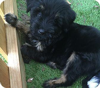 Terrier (Unknown Type, Small) Mix Puppy for adoption in San Antonio, Texas - Alexa
