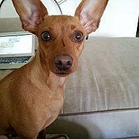 Adopt A Pet :: Olivia - Syracuse, NY