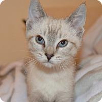 Adopt A Pet :: Nala - Davis, CA