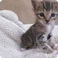 Adopt A Pet :: Oscar - Orlando, FL