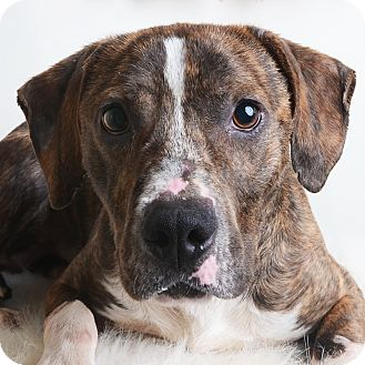 Mixed Breed (Medium)/Terrier (Unknown Type, Medium) Mix Dog for adoption in Wilmington, Delaware - Hanai