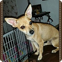 Adopt A Pet :: Shelby - Snyder, TX