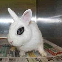 Adopt A Pet :: TREASURE - Los Angeles, CA