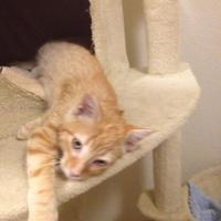 Adopt A Pet :: Tycho - Fort Collins, CO