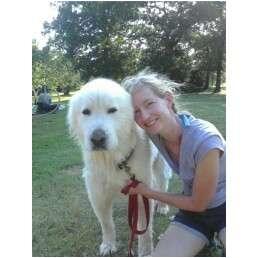 Great Pyrenees Dog for adoption in Tulsa, Oklahoma - Big Guy  LOST DOG