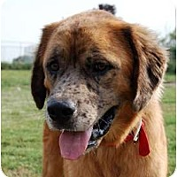 Adopt A Pet :: Tucker - Kansas City, MO