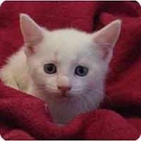 Adopt A Pet :: Tripp - Richmond, VA
