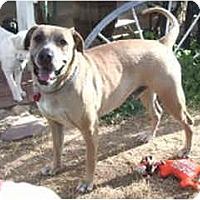 Adopt A Pet :: Jake - Courtesy Post - Scottsdale, AZ
