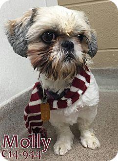 Shih Tzu Mix Dog for adoption in Tiffin, Ohio - Molly