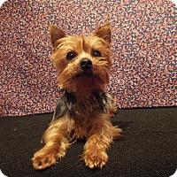 Adopt A Pet :: Caleb - Murphy, NC