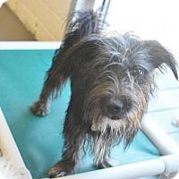 Adopt A Pet :: Elijah - Atlanta, GA