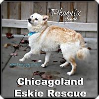 Adopt A Pet :: Phoenix - Elmhurst, IL