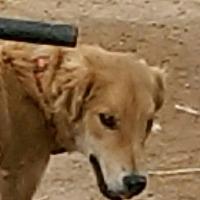 Adopt A Pet :: J.R, - Tonopah, AZ