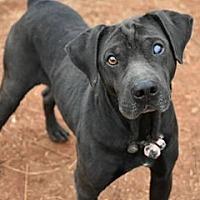 Adopt A Pet :: Teddy - Roswell, GA