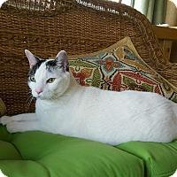 Adopt A Pet :: Catmandu - New Kensington, PA
