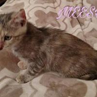 Adopt A Pet :: MEESHA - Lawton, OK
