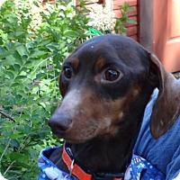 Adopt A Pet :: FRITZ - Portland, OR