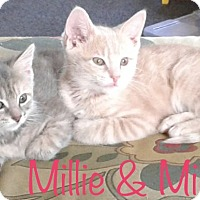 Adopt A Pet :: Millie - Covington, KY