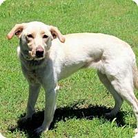 Adopt A Pet :: BLONDIE - Andover, CT