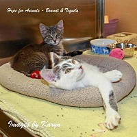 Adopt A Pet :: Tequila - Marlboro, NJ