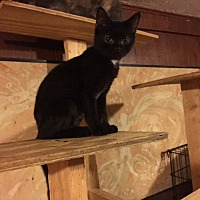 Adopt A Pet :: Hector - Delmont, PA