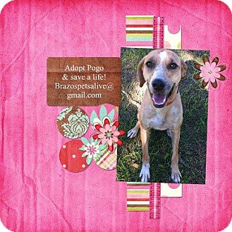 Black Mouth Cur/Hound (Unknown Type) Mix Dog for adoption in College Station, Texas - Pogo