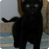 Adopt A Pet :: Raisin - Odenton, MD