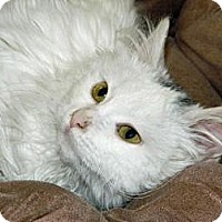 Adopt A Pet :: Boo - Cheyenne, WY