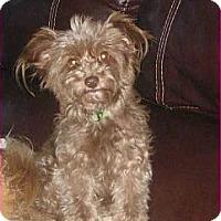 Adopt A Pet :: Penny - Playa Del Rey, CA