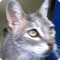 Adopt A Pet :: Lucky - Laguna Woods, CA