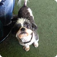 Adopt A Pet :: Jasper - Mount Kisco, NY