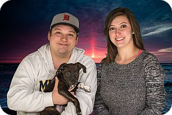 Australian Shepherd Mix Puppy for adoption in Livonia, Michigan - Willow - Adopted 01/24/2015