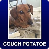 Adopt A Pet :: Jeter - Morrisville, PA
