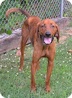Coonhound Mix Dog for adoption in Marietta, Georgia - Dewey