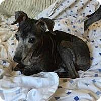 Adopt A Pet :: Simka - Lincoln, NE