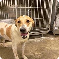 Adopt A Pet :: Kate - Upper Sandusky, OH