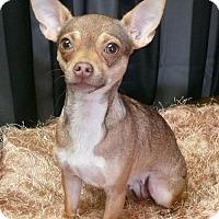 Adopt A Pet :: Ducky - REDDING, CA