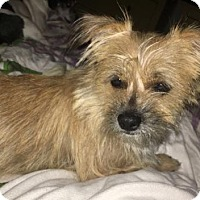 Adopt A Pet :: Buster Brown - Fort Lauderdale, FL