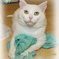 Adopt A Pet :: Anastasia - Shippenville, PA
