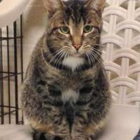 Adopt A Pet :: Dyngus - Westville, IN