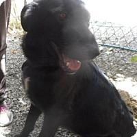 Adopt A Pet :: Heidi - Yucaipa, CA