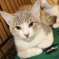 Adopt A Pet :: ANANDA - Houston, TX