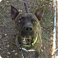 Adopt A Pet :: Kei - Bonaire, GA