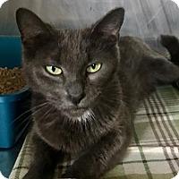 Adopt A Pet :: Nadine - Binghamton, NY