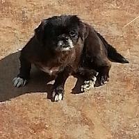 Adopt A Pet :: Pennie - Dothan, AL